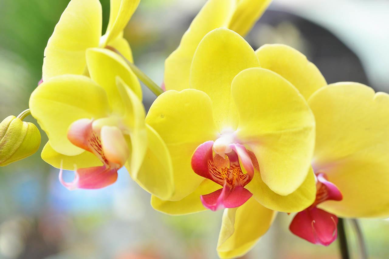 蘭花構造介紹