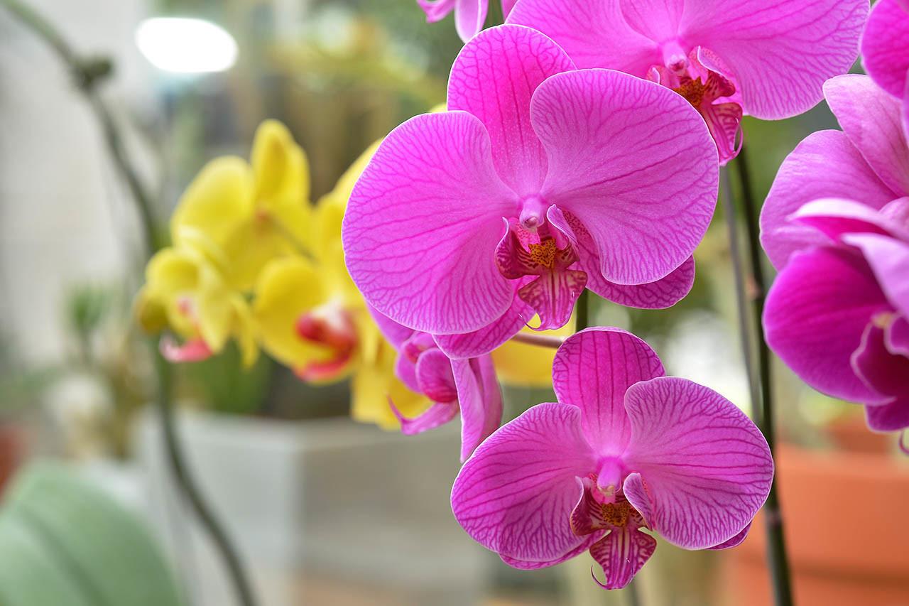 蘭花也算是多肉植物?教你如何照顧 WEDO 蘭花 14