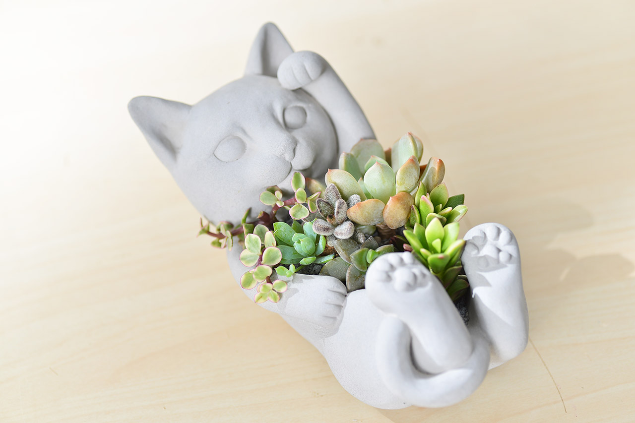 招財貓 - 招貴人組盆 2