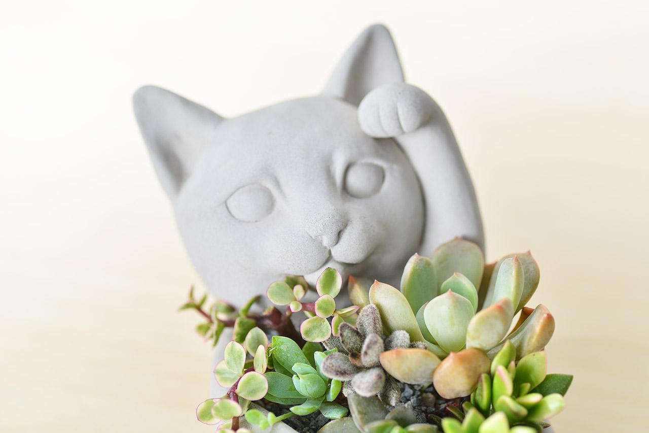 招財貓 - 招貴人組盆 3