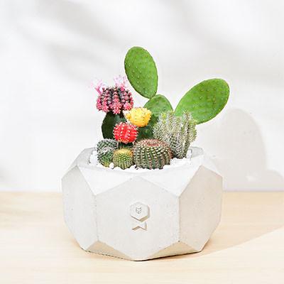 開幕賀禮-仙人掌桌上型盆栽