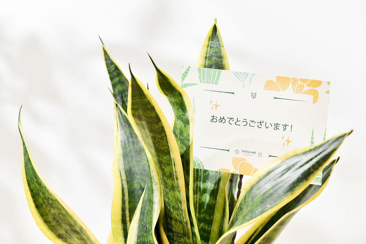 日文祝賀卡片
