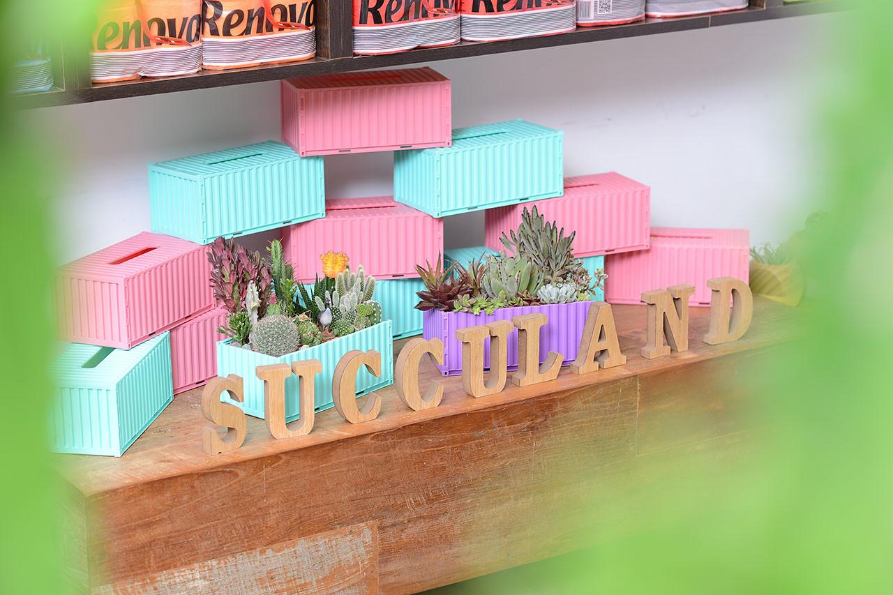 [ 門市活動 ] 彩虹多肉植物園 s貨櫃屋面紙盒變身為多肉植物盆器2