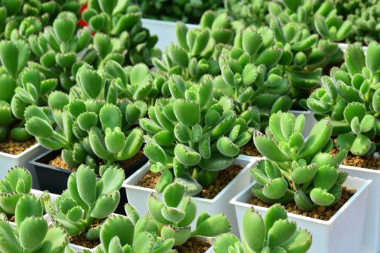 全日照?半日照?教你搞懂植物的需要! 2