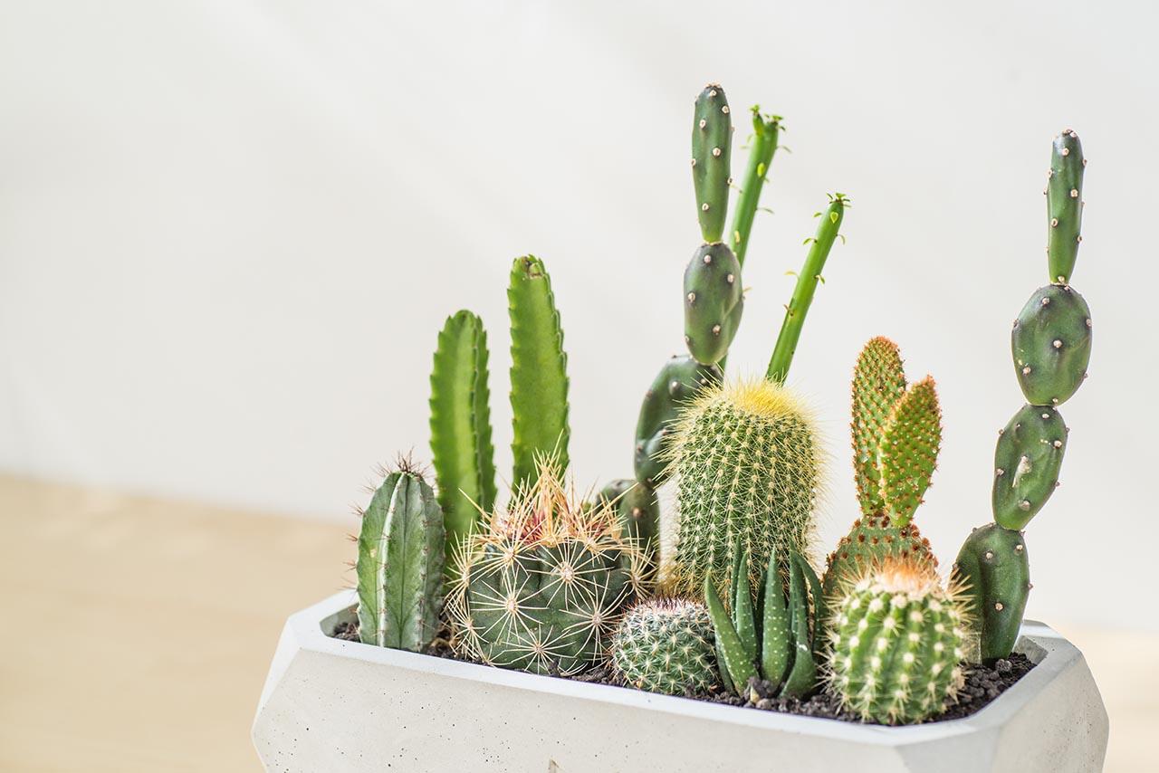 精選仙人掌植物