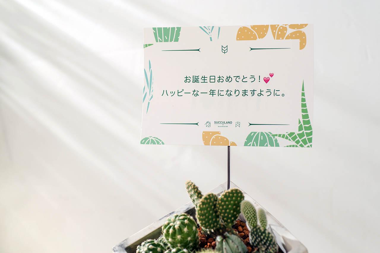 歐巴人生+多肉植物 4