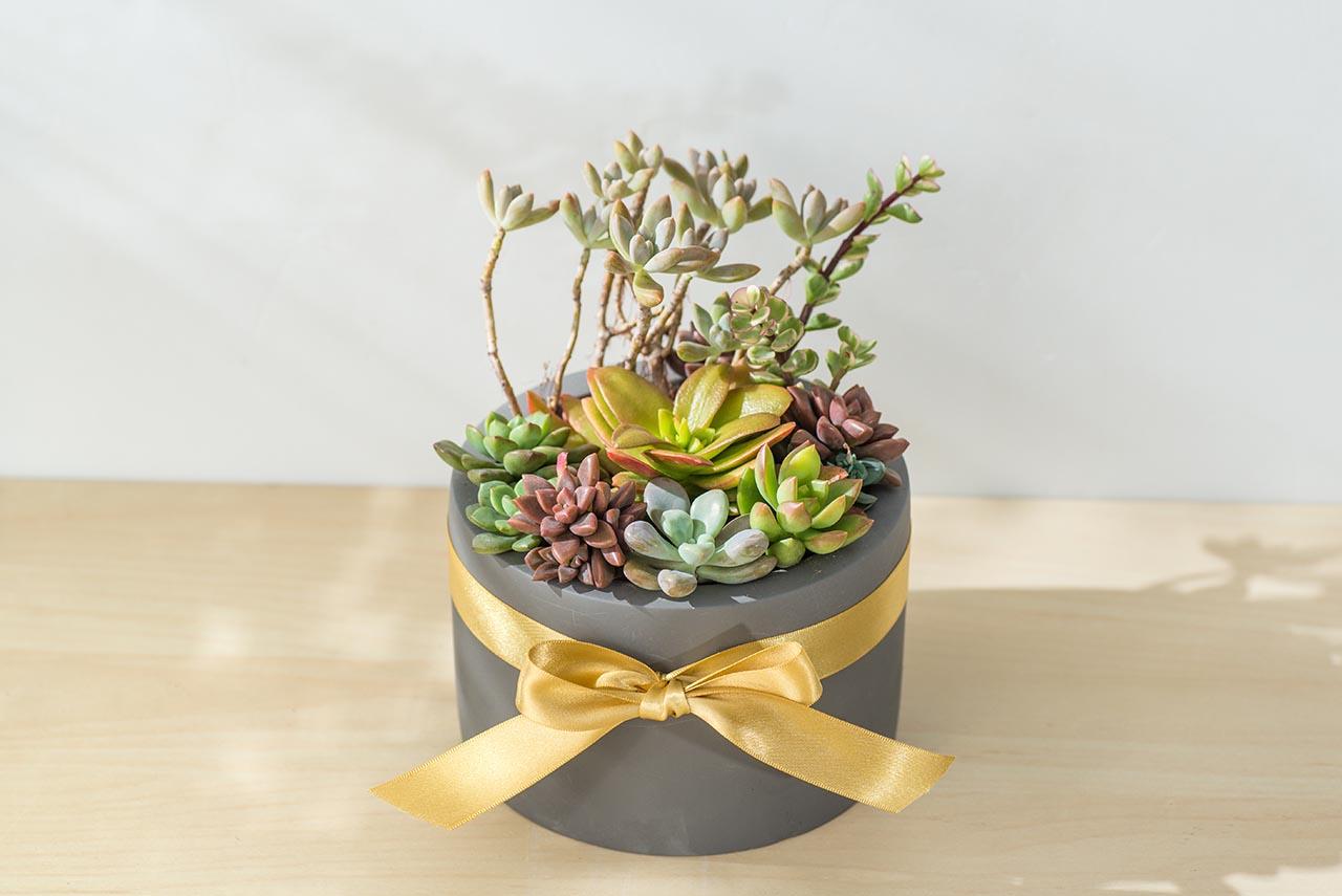 桌上盆栽送禮