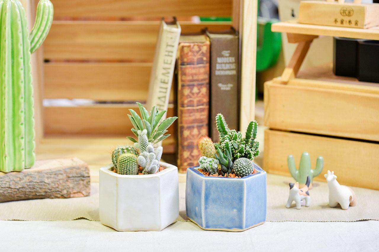 居家植物佈置