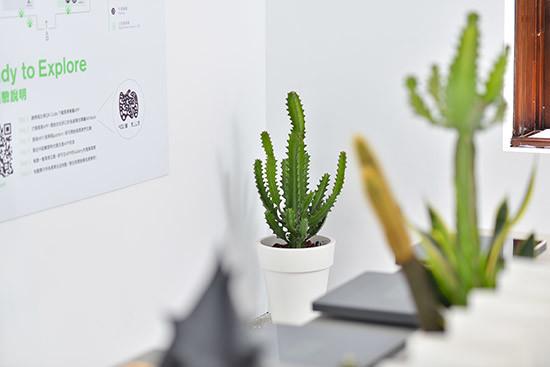黑青展覽植物佈置-落地盆栽佈置