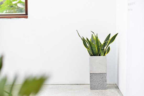 黑青展覽植物佈置-展場佈置搭配綠植
