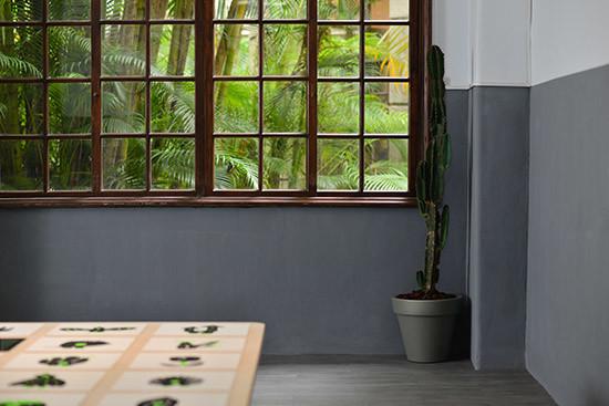 黑青展覽植物佈置-風格佈置搭配仙人掌