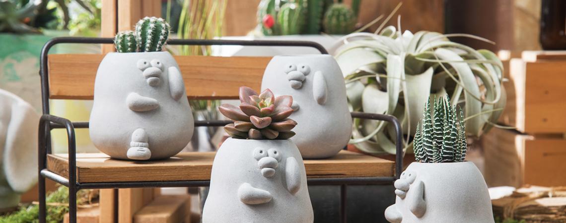 五種最適合當生日禮物的盆栽推薦 1107 爽爽貓&奧樂雞聯名水泥盆拍攝 178