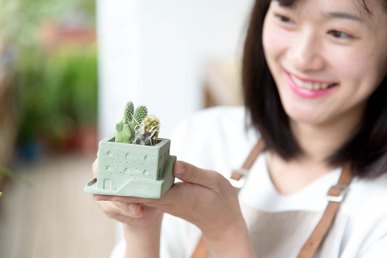最多讚的七種仙人掌盆栽 8