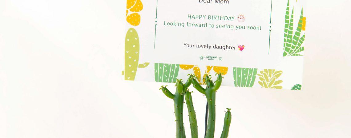 生日快樂!中、英、日文的生日祝賀詞 1