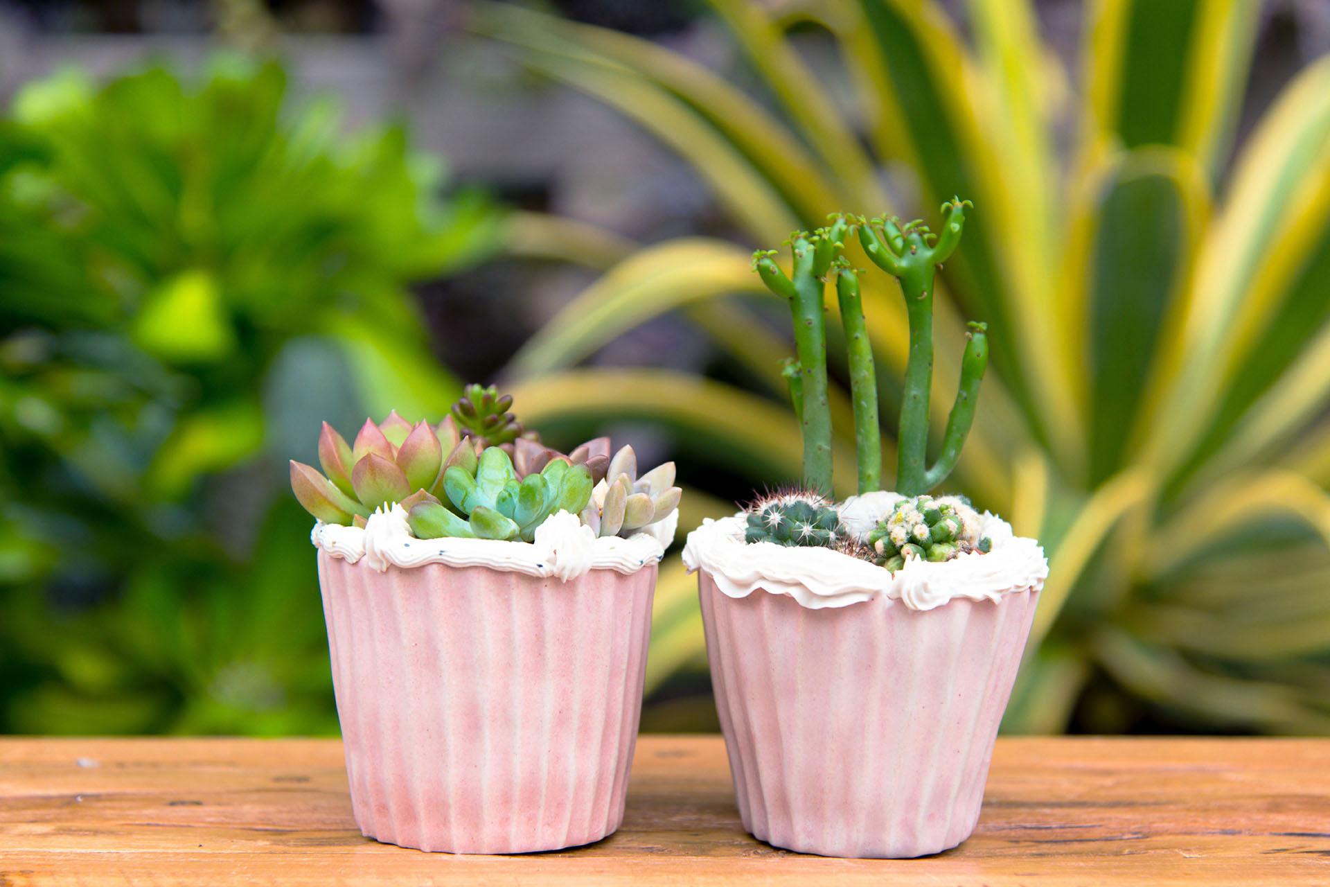 生日禮物 - 仙仙蛋糕盆栽 6