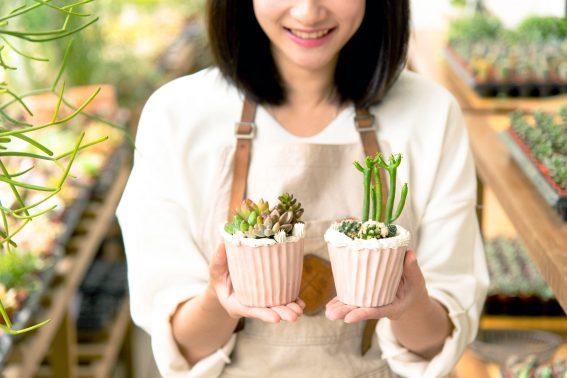 禮物象徵與蛋糕盆栽