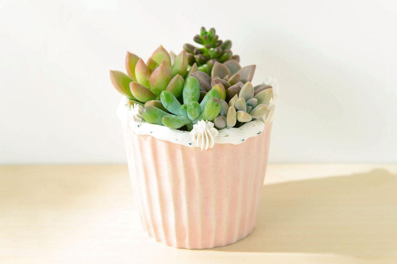 小蛋糕多肉盆栽