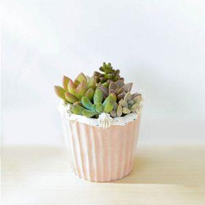 生日禮物盆栽