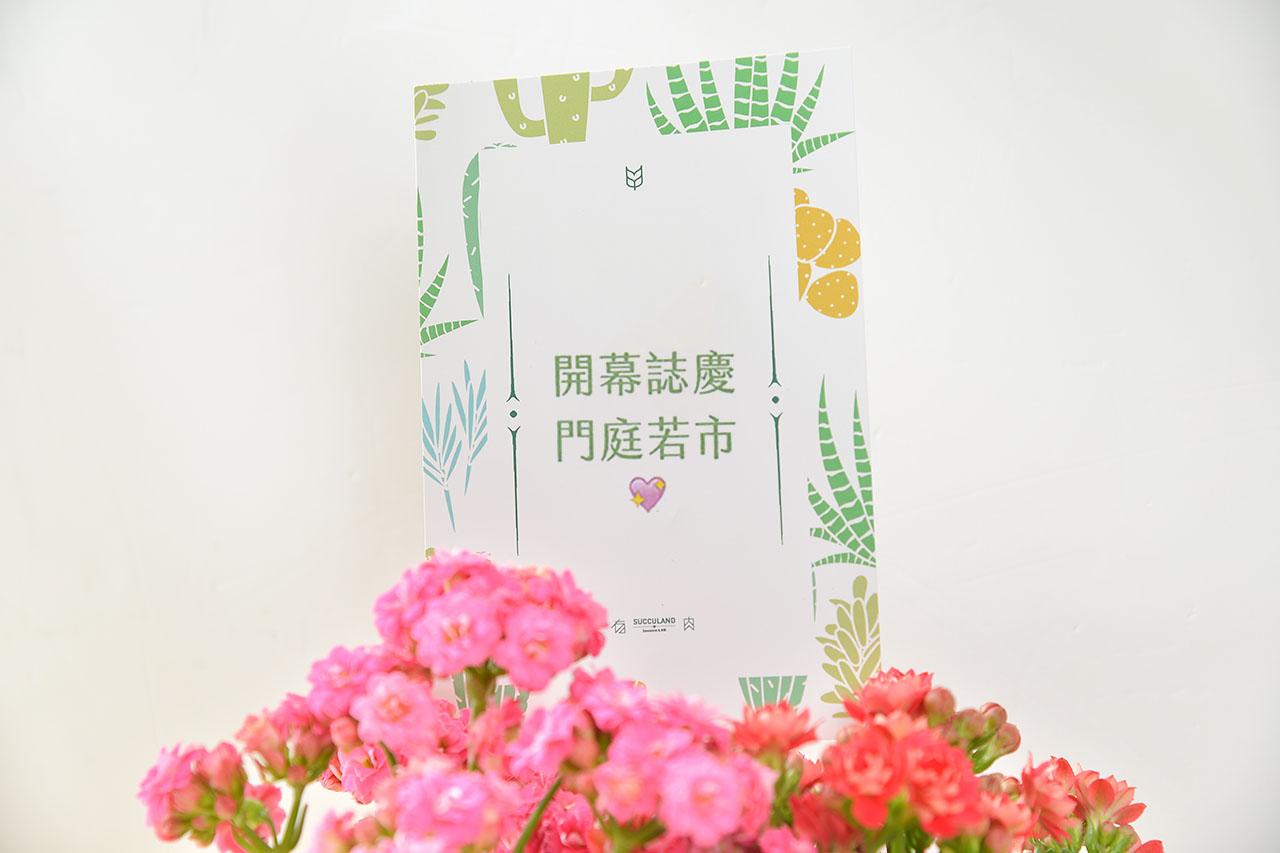 長壽花盆栽 - 石紋圓盆 9