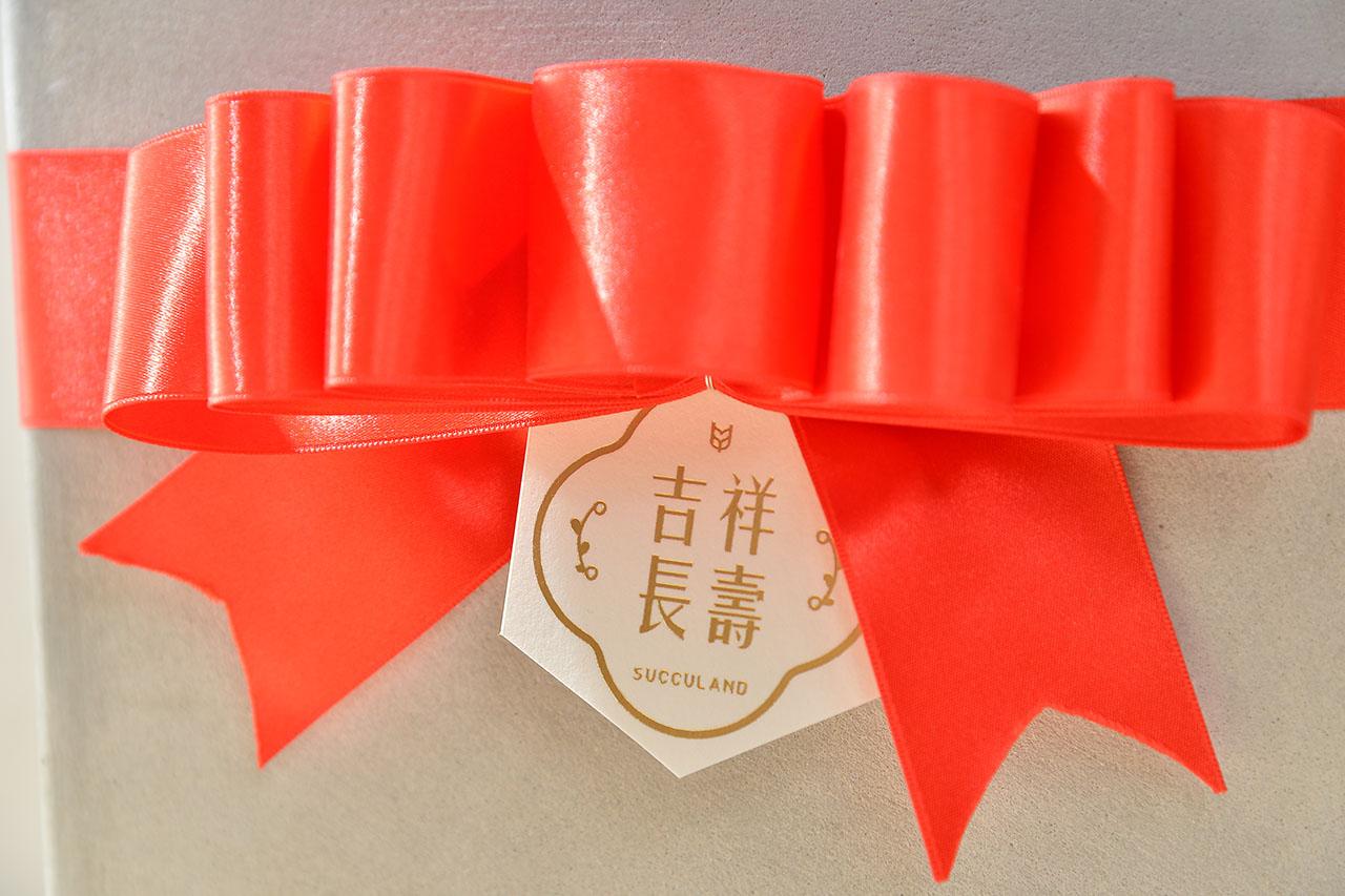 紅花與黃花長壽花盆栽 (2 - 30)