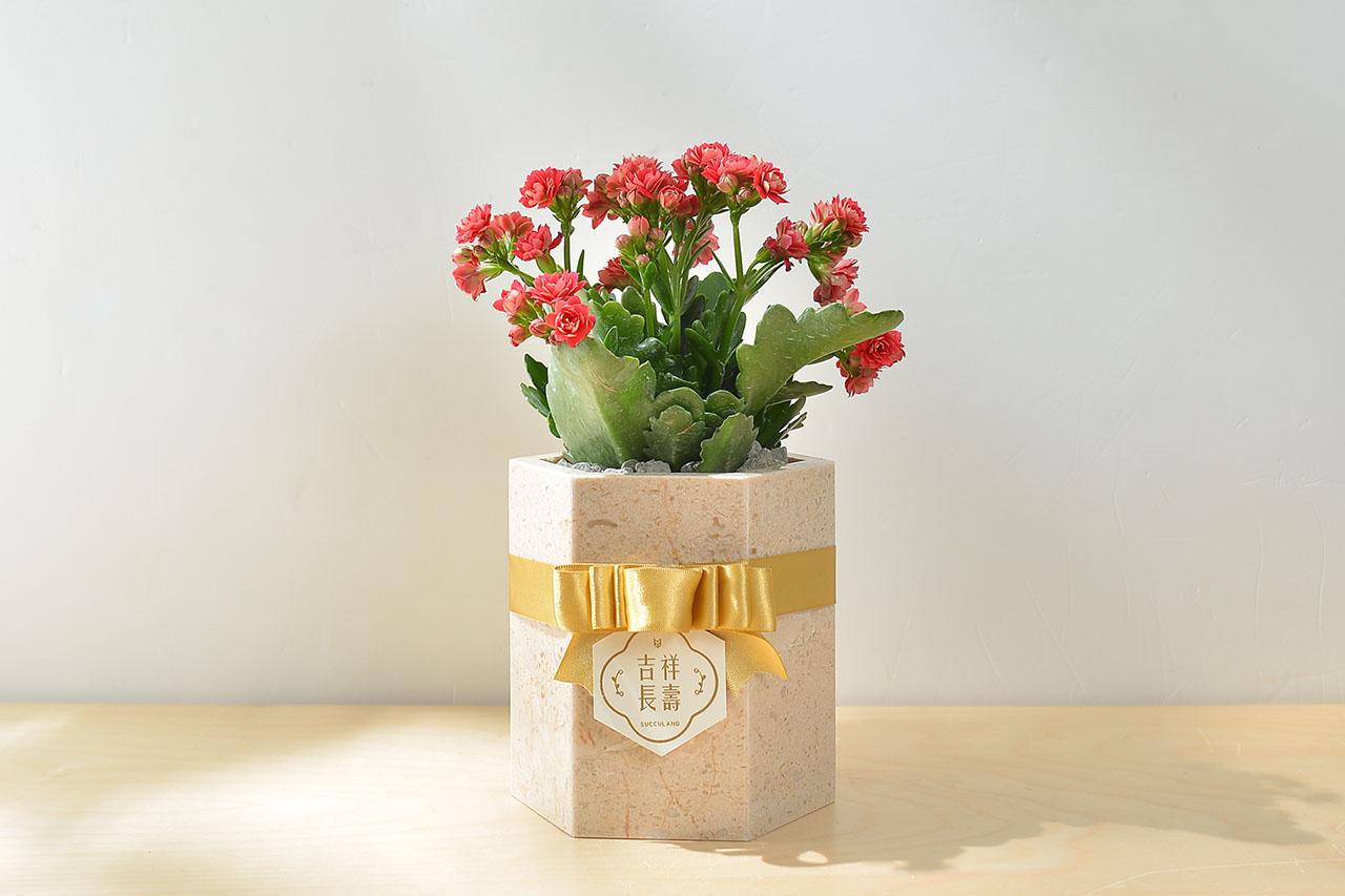 長壽花盆栽 - 大理石盆 24 30