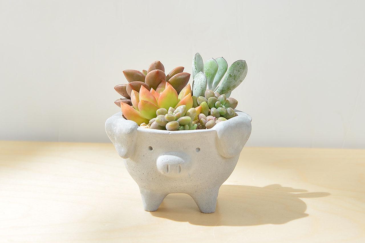 小豬生日禮物