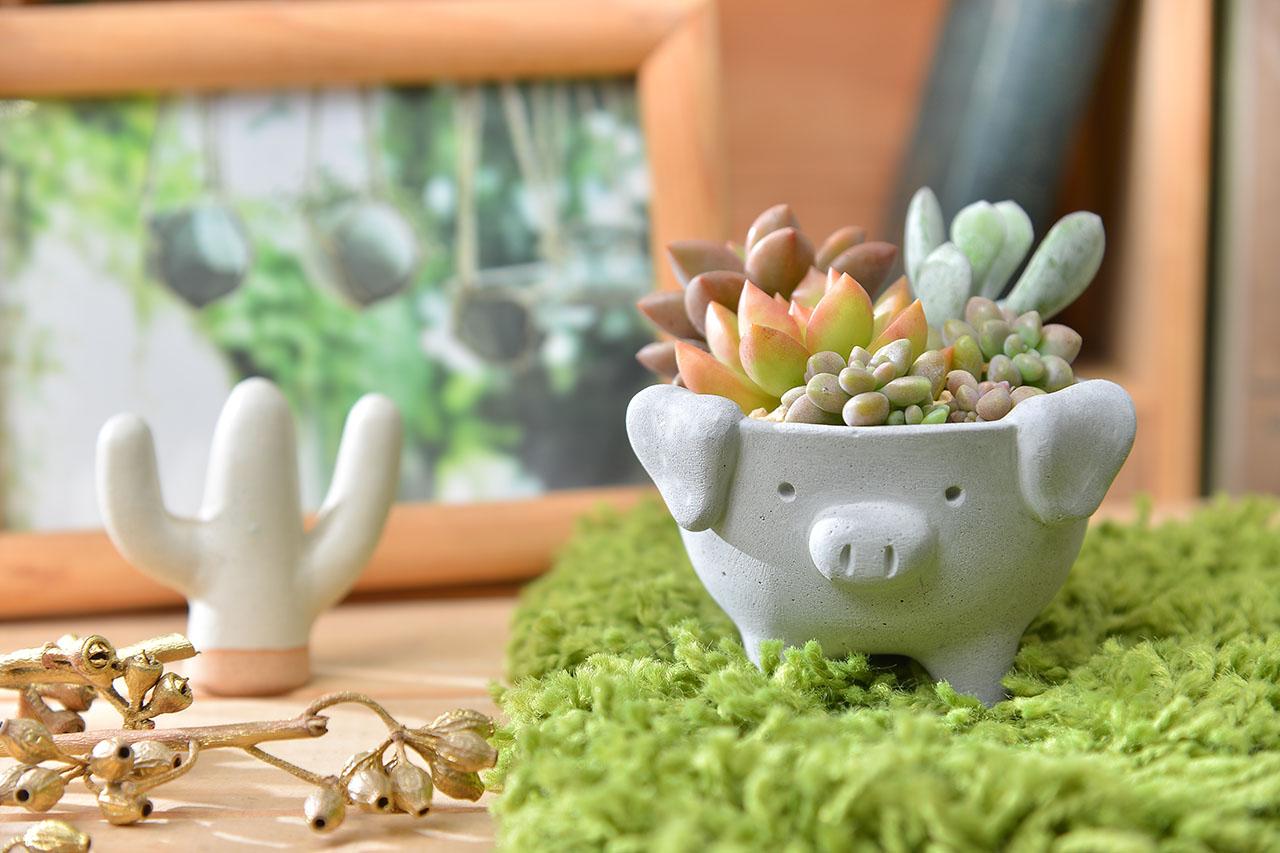 豬造型盆器
