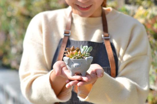 萌萌豬寶盒盆栽