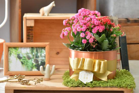 祝福圓滿的年節禮盒、春節花藝課程一次到位! 1 6