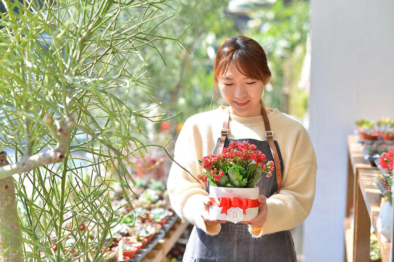 長壽花盆栽 - 石紋圓盆 3