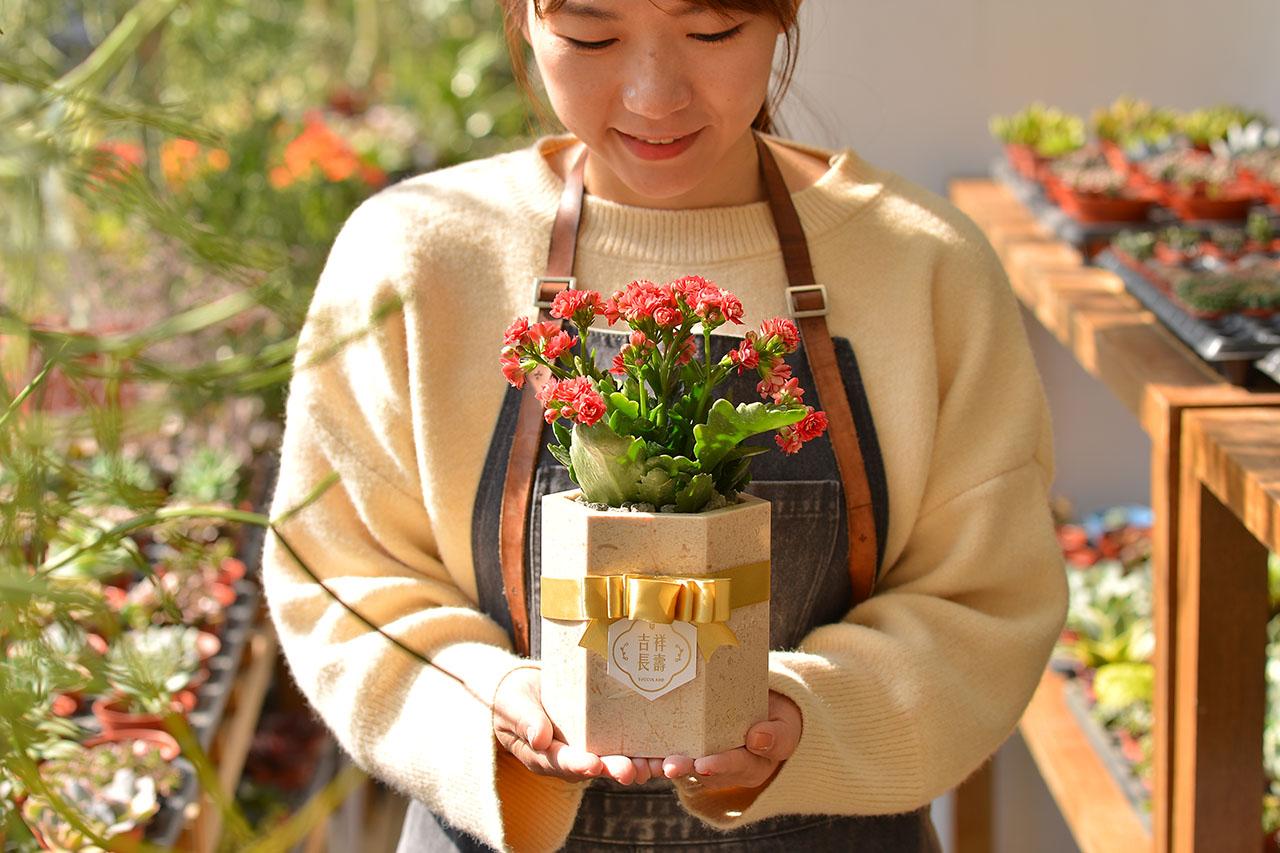 長壽花盆栽 - 大理石盆 7 12