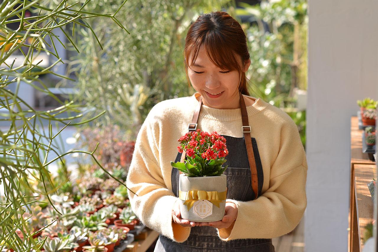 長壽花盆栽 - 小洛克 9 12