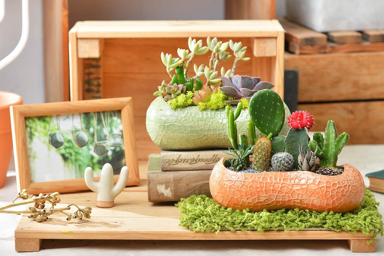 可愛造型盆栽慶祝開幕