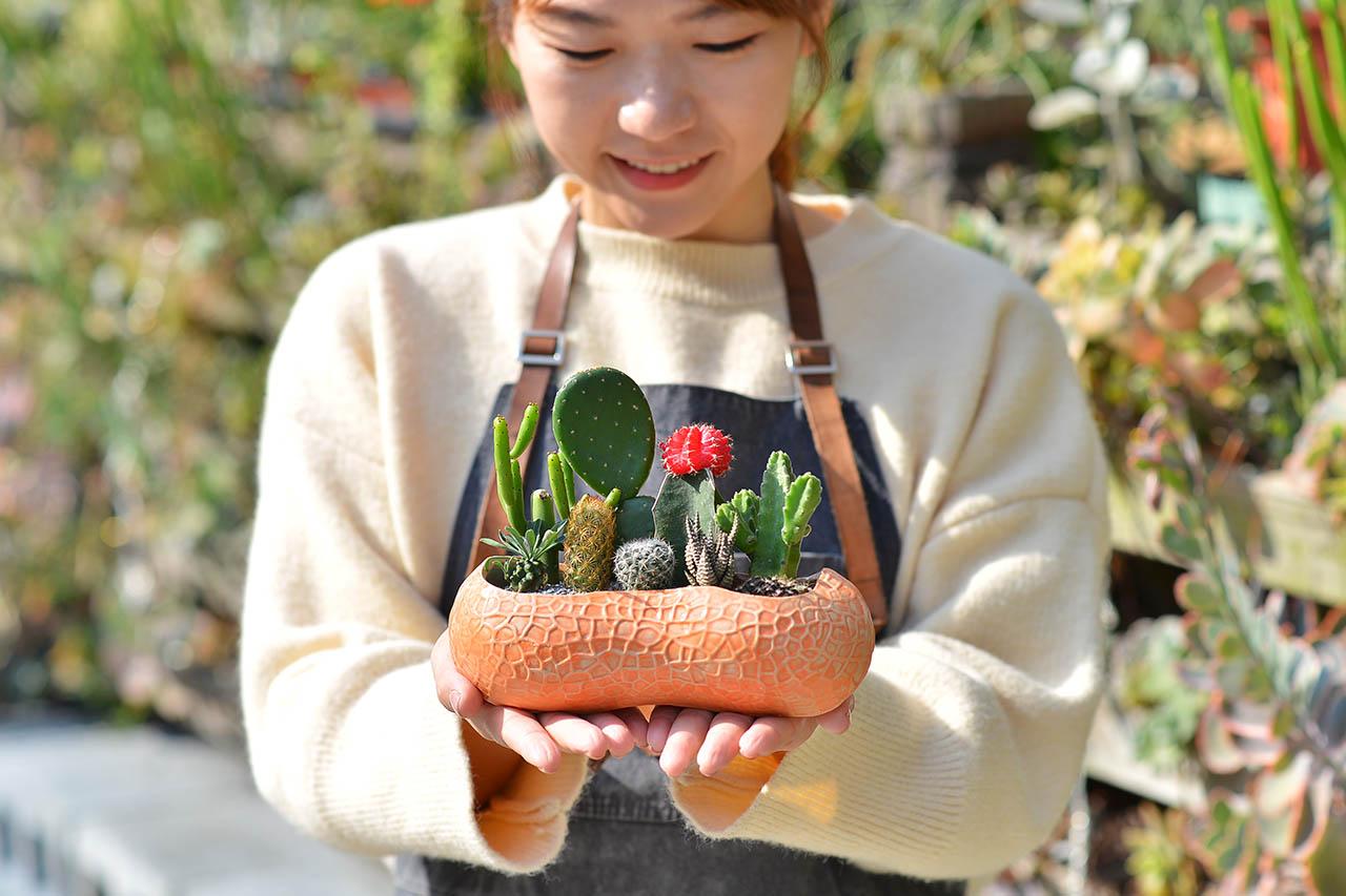 多肉植物花生盆栽照顧