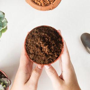 多肉植物專用介質-泥炭土
