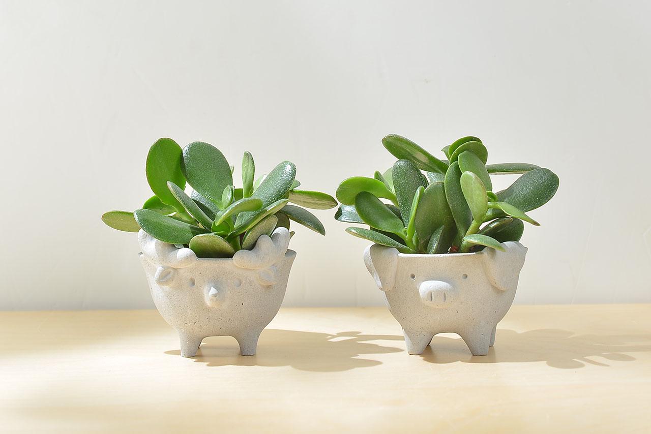 小動物造型盆栽