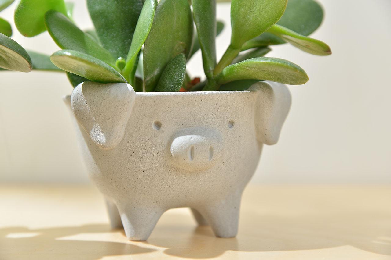小豬水泥盆栽