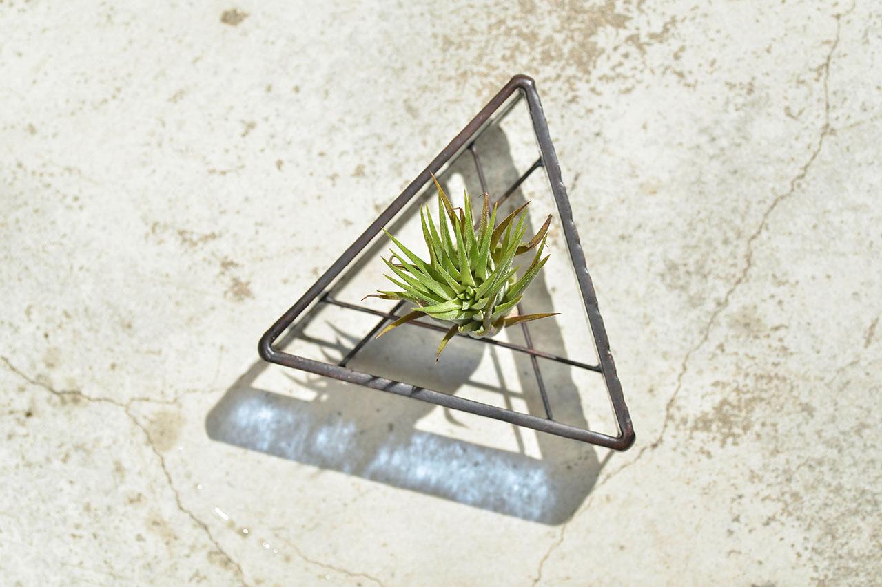 空氣鳳梨盆栽