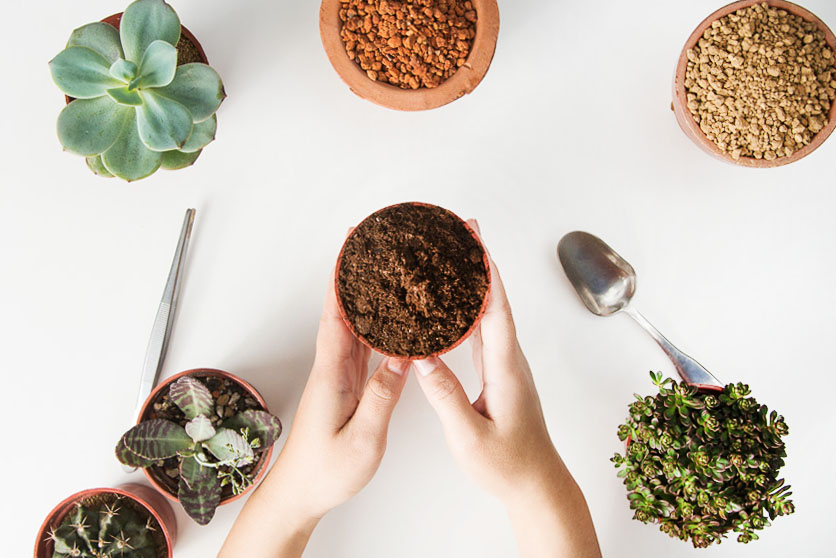 多肉植物專用土:泥炭土 1