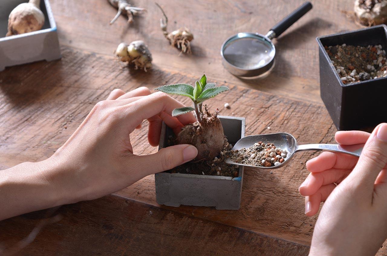 多肉植物專用土:泥炭土 DSC 5549