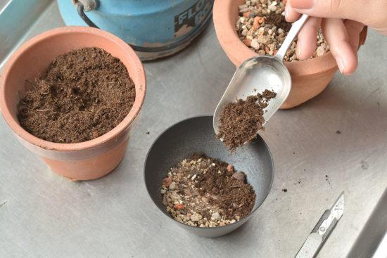鏡面草土壤介質