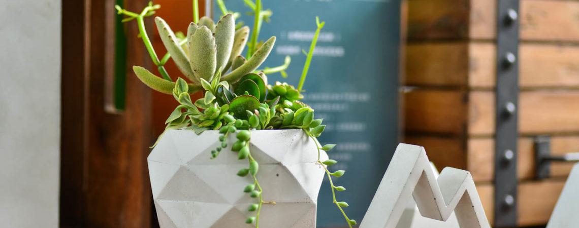 室內盆栽的英文 教你找盆栽搭配照 0910 台北盆器設計師展 三角戀 069