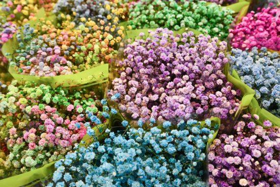 乾燥花介紹-內湖花市-2
