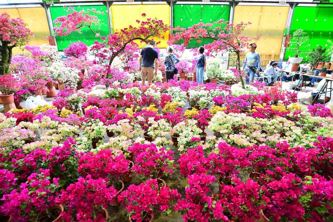 台北六大花市介紹-建國花市