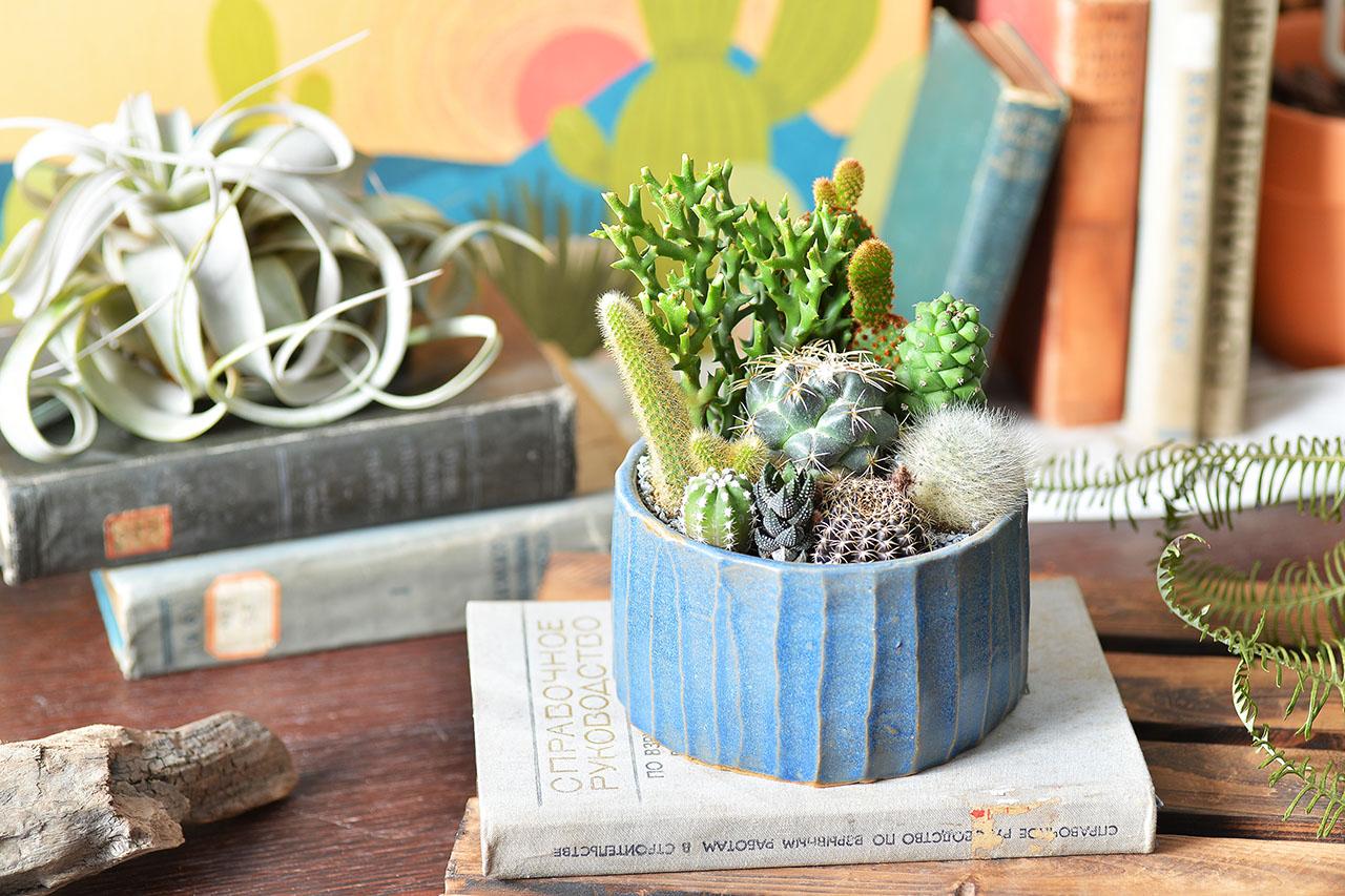 cactus pottery