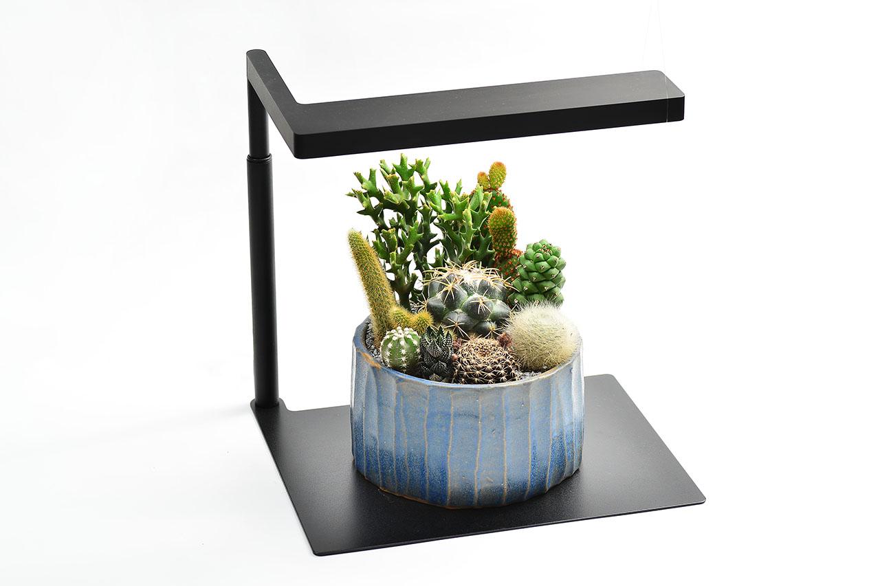 植物燈+多肉盆栽一對組