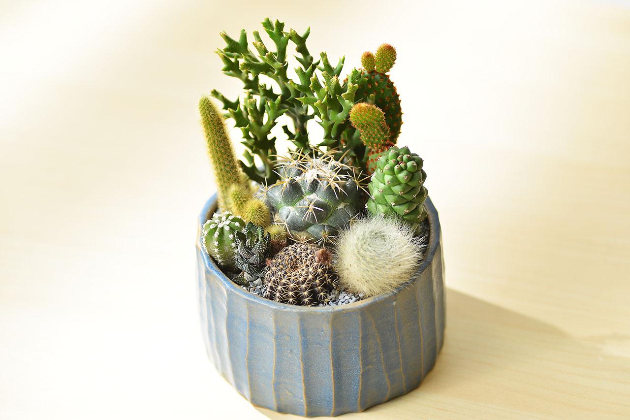 cacti gift