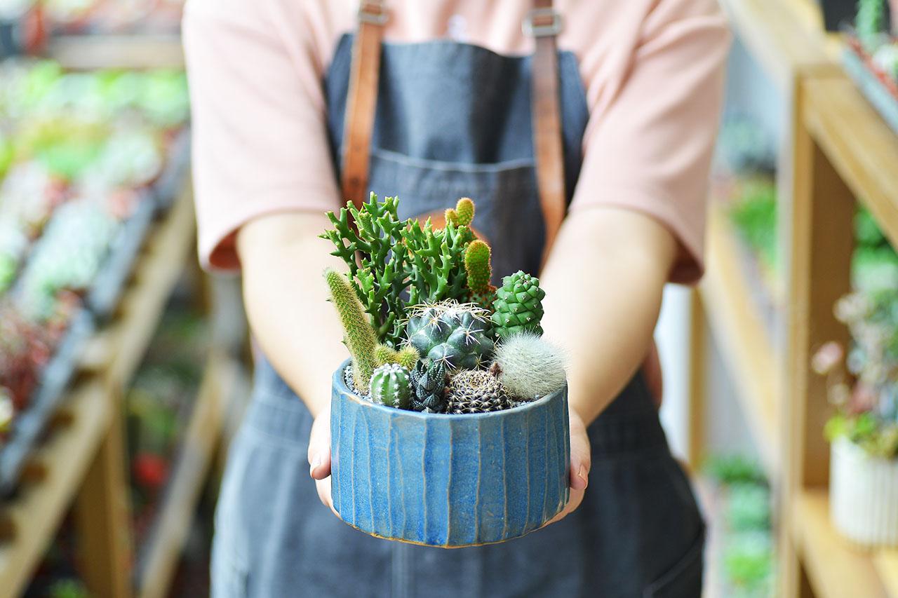 夏之饗宴+多肉植物燈 9