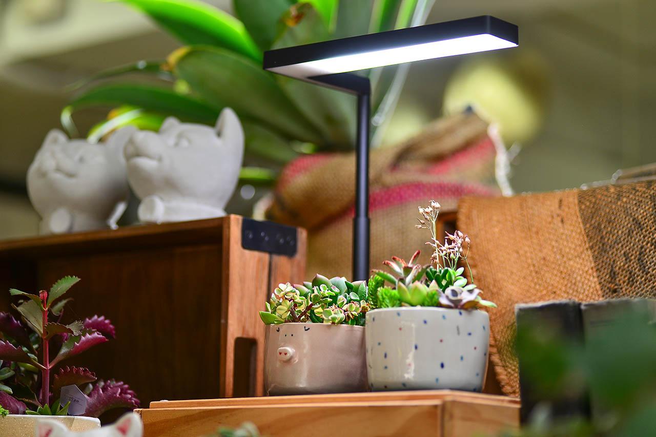 植物燈與多肉盆栽