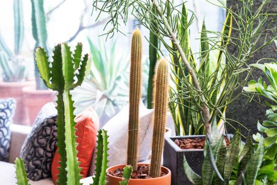 全日照?半日照?教你搞懂植物的需要!
